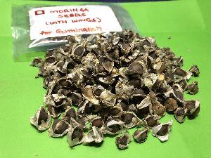 Moringa Seeds with Wings