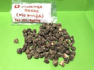Moringa Seeds Without Wings