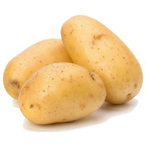 High Quality Potato
