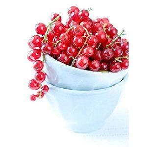 Organic Red Gooseberry
