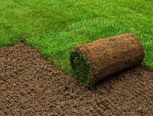 Home Lawn Grass Carpet