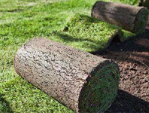Natural Lawn Grass Carpet