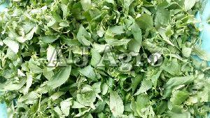 Green Stevia Leaves