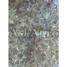 Natural Stevia Seeds