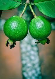 Fresh Green Guava