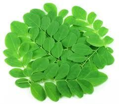 Herbal Moringa Leaves
