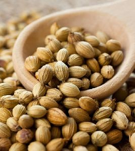 High Quality Organic Coriander Seeds