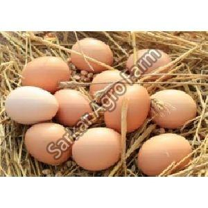 Kadaknath Chicken Eggs
