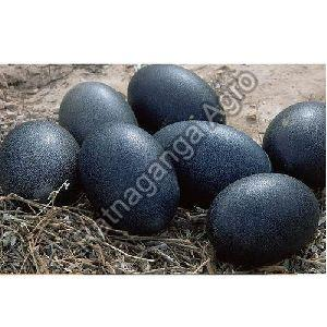 Kadaknath Chicken Eggs