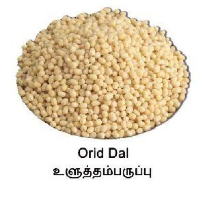 Orid Dhall