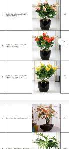 Artificial Bonsai Plants