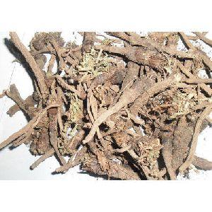 Dry Akarkara Root