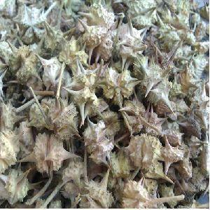 Small Gokhru Seed