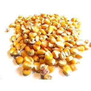 Maize Seeds for Animals