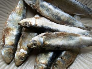Dried Sardine Fish