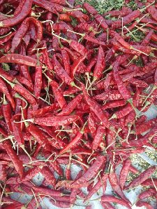 Byadigi Dry Red Chilli