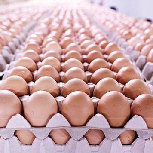 Kadaknath Chicken Egg