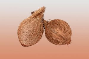 Pooja Coconut
