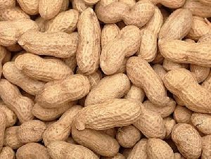 Raw Shelled Groundnuts