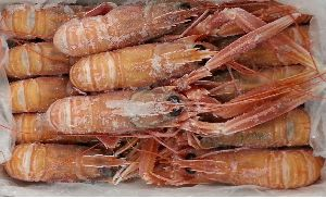 Chilled Scampi Fish
