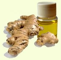Essential Ginger Oil