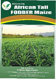 African Tall Fodder Maize