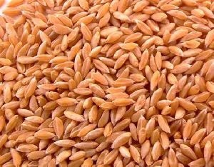 Bhaliya Wheat
