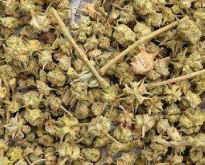 Dried Gokhru
