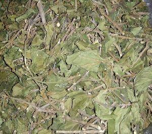 Dried Gurmar Leaves