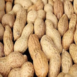 Whole Groundnut