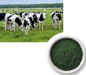 Spirulina Dairy Feed Supplement