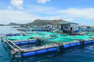 Fish Cage Net