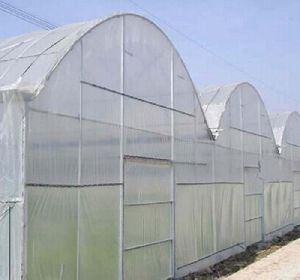 Greenhouse Insect Netting Screens