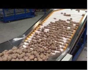Potato Sorting Grading Machine
