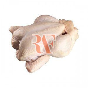Frozen Broiler Chicken