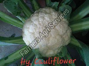 Hybrid Cauliflower Seeds