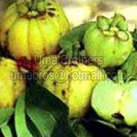 Garcinia Cambogia Extract Suppliers