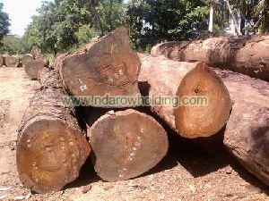 Pachyloba Wood Logs