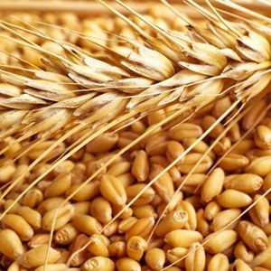 Wheat Products