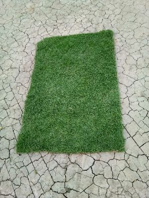 CARPET GRASS SAMPLE