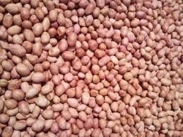 Natural Groundnut Seeds