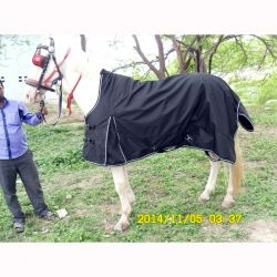 High Neck Turnout: Horse Blankets