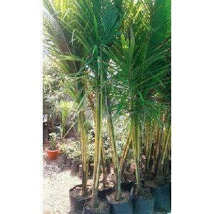 Manufacturer & Supplier of Nursery Plants in Pune India
