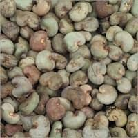 Shelled Raw Cashew Nuts