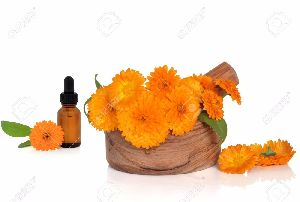 Calendula Essential Oil