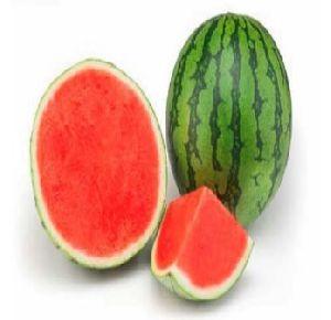 Fresh Mini Watermelon