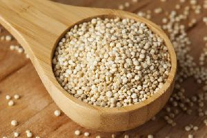 Fresh Quinoa Seeds