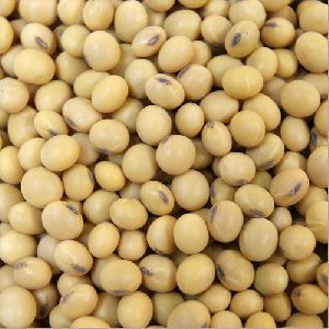 Fresh Soybean Seeds