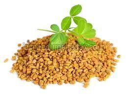 Fresh Fenugreek Seeds