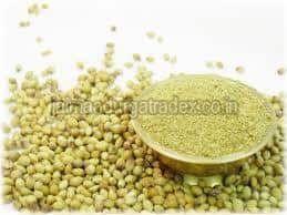 Fresh Organic Coriander Powder